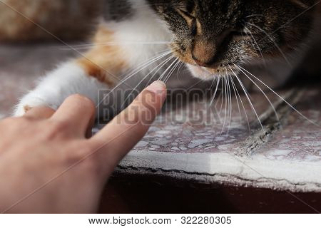 Playing With Domestic Cat On Who First Touch The Other. Cat´s Paw Versus My Finger. Who Will Win. Fa