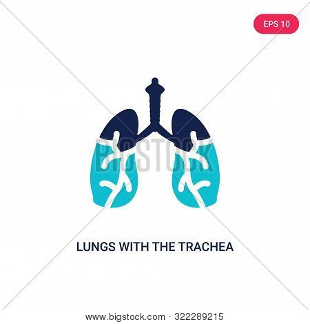 lungs with the trachea icon in two color design style.