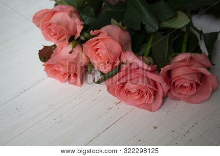 Pink Roses Flower. Beautiful Lily Flower In A Lily Flower Garden. Roses Flower. Spring Flowers Of Ro