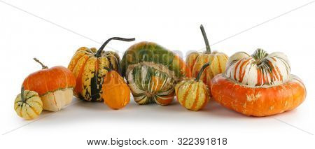 Assortiment of autumn harvested pumpkins in a heap isolated on white background , Halloween holiday concept