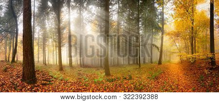 Misty Autumn Forest With Beautiful Rays Of Soft Light Falling Through Trees Unto A Leaves-covered Fo