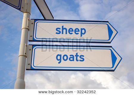 sheep ang goats