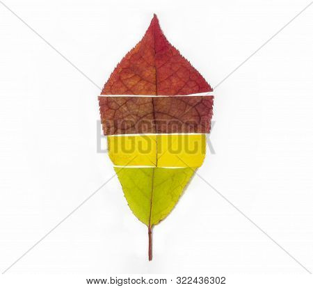 Colorful Cut Leaves Of Trees Of Different Colors Stacked In The Form Of A Leaf Symbolize The Change