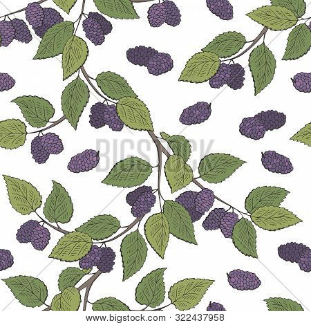 Mulberry Berry Branch Graphic Color Seamless Pattern Background Sketch Illustration Vector