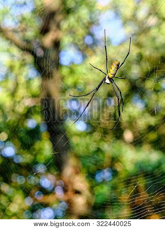Orb Weaver Spider Across A Trail In The Forest