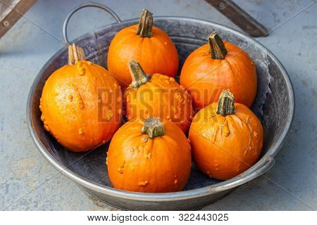 Orange Ripe Mandarin Pumpkin, Heap Of Pumpkins In A Metal Bowl, Vegetable Background