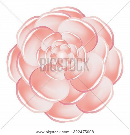 Light Pink Camellia Icon. Cartoon Of Light Pink Camellia Vector Icon For Web Design Isolated On Whit