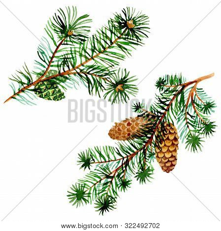 Branches Of Spruse And Pine. Watercolor Background Illustration Set. Isolated Spruce Illustration El