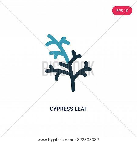 cypress leaf icon in two color design style.