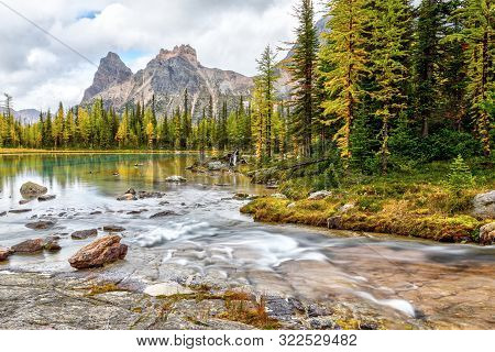 Golden Larch Trees On Moor Lakes At Lake O'hara In Canadian Rockies