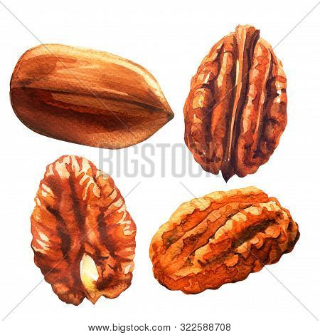 Tasty Pecan Nut, Whole Nuts In Skins And Pecan Halves Peeled, Dried Pecans Set, Close Up, Isolated,