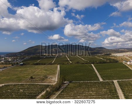 Aerial Shot Of Green Hills With Vineyards In Novorossiysk City, Russia. Mountain Wizard