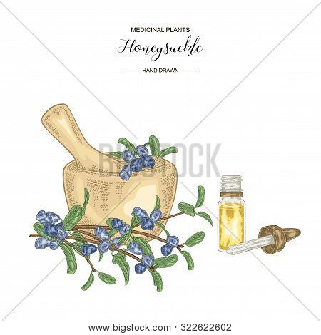 Honeysuckle Branch With Ripe Berries. Lonicera Japonica. Medical Plants Hand Drawn. Vector Botanical