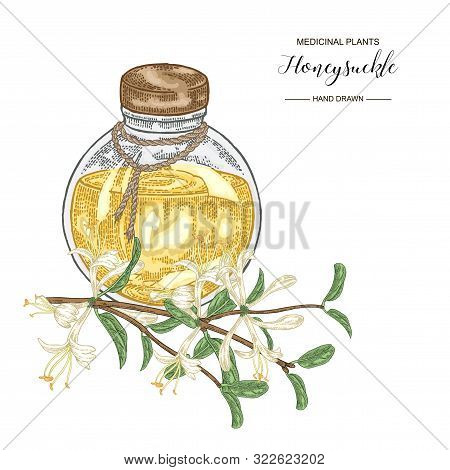 Honeysuckle Branch With Flowers And Leaves. Lonicera Japonica. Medical Plants Hand Drawn. Vector Bot