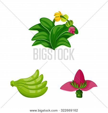 Vector Illustration Of Tropical And Ripe Sign. Set Of Tropical And Potassium Vector Icon For Stock.