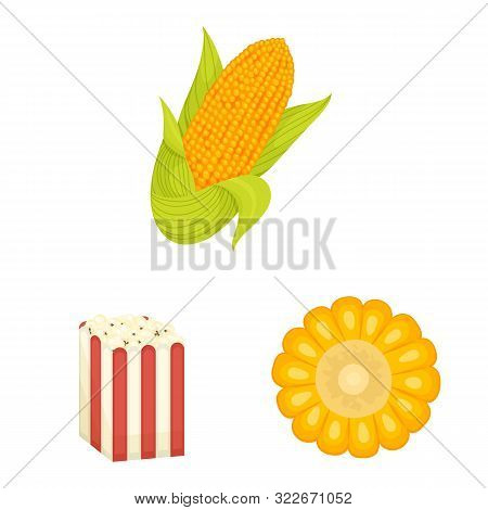 Vector Design Of Maize And Food Sign. Set Of Maize And Crop Vector Icon For Stock.