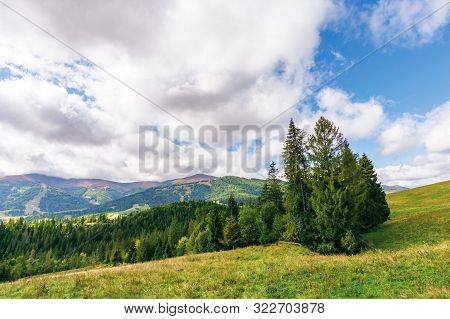 Spruce Forest On The Grassy Hill In Mountains. Borzhava Mountain Ridge In The Distance Beneath A Clo