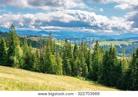 Coniferous Forest On The Grassy Hill. Great View In To The Distant Gorgany Ridge. Wonderful Sunny We