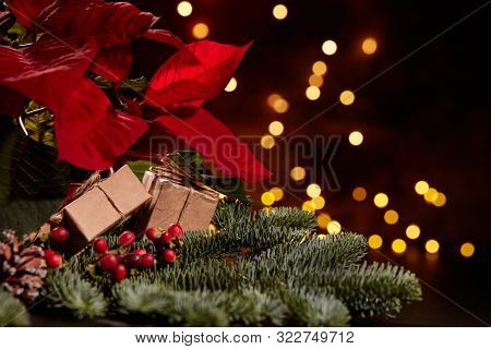 Christmas decoration with Red Poinsettia flowers (Euphorbia Pulcherrima), fir branch on a dark background with LED lights garland. New year and Christmas background with copy space. Greeting card.