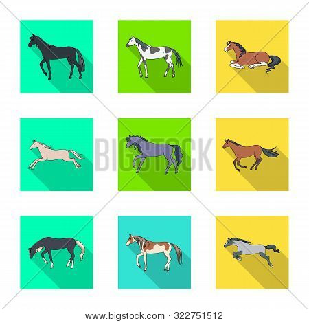 Vector Illustration Of Breed And Equestrian Icon. Collection Of Breed And Mare Vector Icon For Stock
