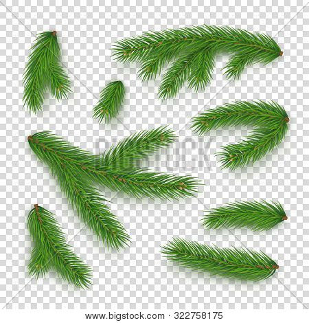 Realistic Branches Of Christmas Tree Isolated On Transparent Background. Merry Christmas And Happy N