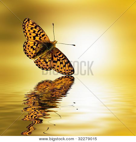 Butterfly in sunset with water reflection