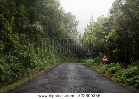 Road To The Mist In The Forest In The Island Of Madeira
