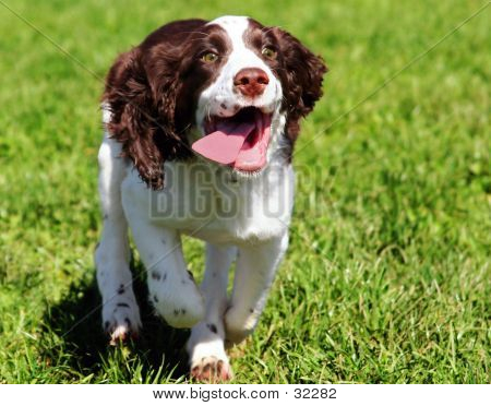poster of happy dog running in grass