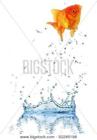 Jumping fish out of water, concept of challenge. Isolated on white background poster