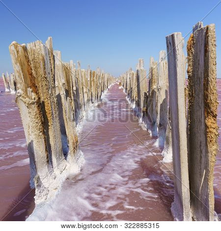 Palisade Of The Wooden Skeleton Of The Destroyed Dam On The Salt Lake Sasyk Sivash Bright Pink In Th