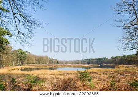Landscape with nature fen in Dutch forest