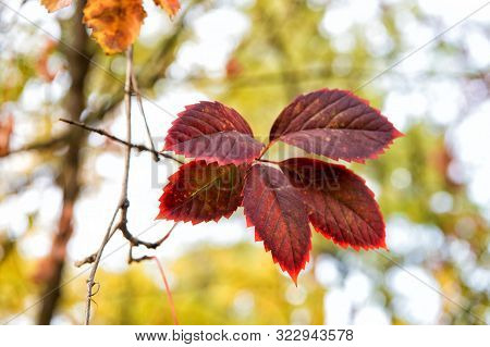 poster of Red leaf. Autumn is already here. Vibrant leaves close up. Autumnal background. Branch leaves. Floral pattern design. Bright fall season. Goodbye september. Why leaves changing color.
