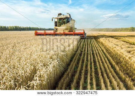 Against The Backdrop Of A Sunny Summer Day And Blue Sky With Clouds. Combine Harvester Harvesting Ri
