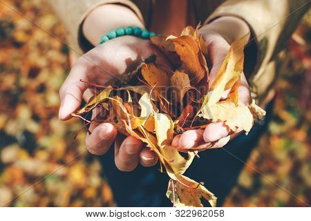 Autumn Leaves In Girl Hands. Autumn Mood. Fall Time. Sunny Autumn Weather. Autumn Girl Enjoy Fallen