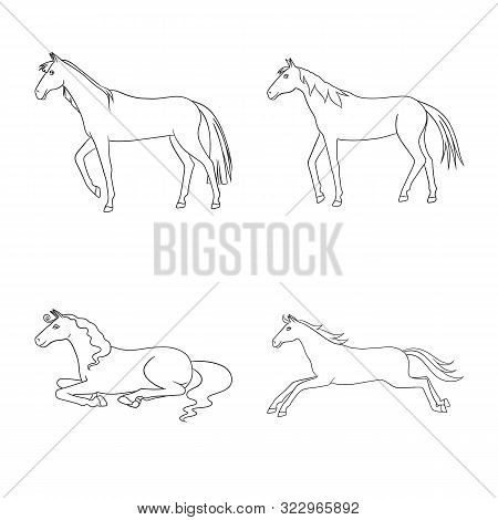 Vector Design Of Stallion And Galloping Icon. Set Of Stallion And Riding Stock Vector Illustration.