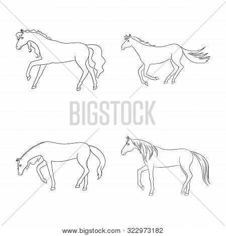 Isolated Object Of Stallion And Galloping Symbol. Set Of Stallion And Riding Stock Symbol For Web.