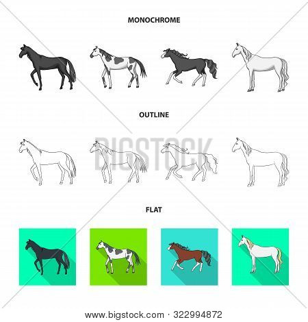 Vector Illustration Of Breed And Equestrian Sign. Set Of Breed And Mare Stock Symbol For Web.