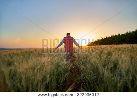 Male Hand Moving Over Wheat Growing On The Field. Field Of Ripe Grain And Mans Hand Touching Wheat I
