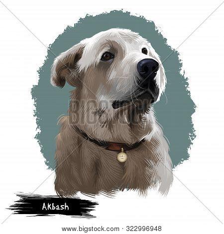 Akbash Dog Digital Art Illustration Isolated On White Background. Livestock Guardian Shepherd Dog. N