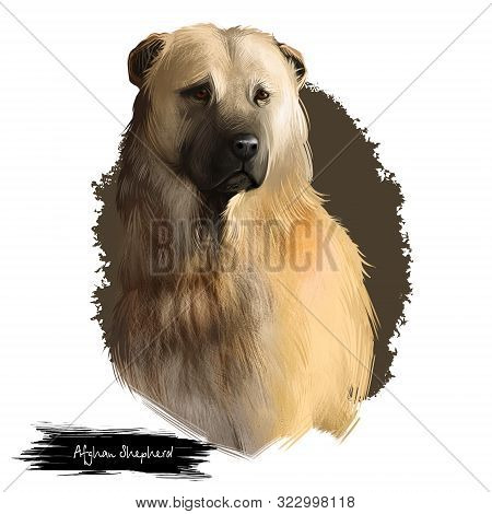 Afghan Shepherd Breed Digital Art Illustration Isolated On White Background. Cute Domestic Purebred