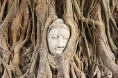 the head of the sandstone buddha , ayutthaya thailand poster