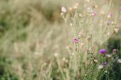 Autumn withered grass closeup with blurred background poster