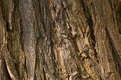 Structure of a bark old wooden trunk poster