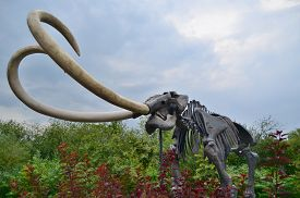 Imitation Of A Mammoth Skeleton In Nature, Czech Republic
