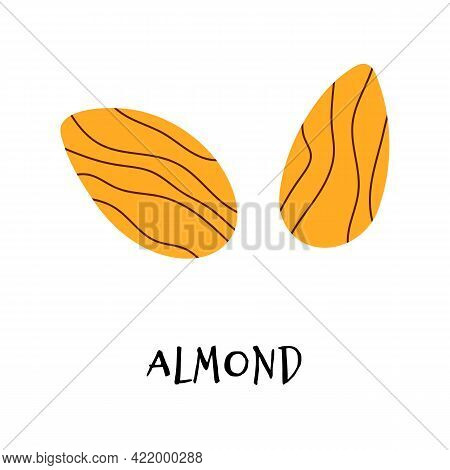 Vector Illustration Of Almond In Hand Drawn Flat Style.