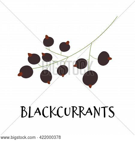 Vector Illustration Of Black Currant In Hand Drawn Flat Style.
