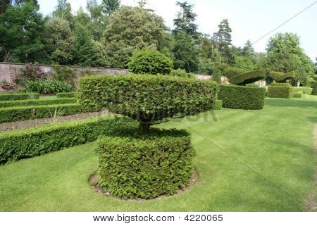 Topiary. Garden art/ design/ landscape. Decoration. Trees in the shape of bird. poster