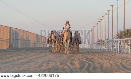 Ash-shahaniyah, Qatar- March 21 2021 : Jockeys Taking The Camels For Walk In The Camel Race Tracks.