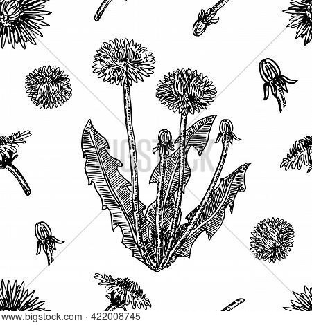 Graphic Hand Drawn Dandelions. Cover Page Template With Dandelions Based On Seamless Pattern. Vector