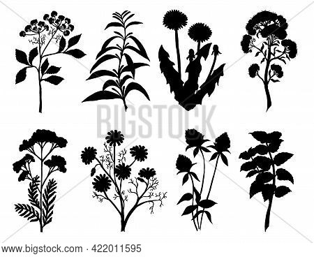 Set Of Silhouette By Herbs And Flowers, Hand Drawn Sketch. Medicinal And Tea Herbs Silhouettes. Blac